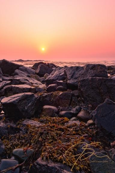Sun, Rocks, And Seaweed, Odiorne Point, NH