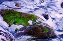 bright green algae under a thick layer of crystal clear stream side ice.