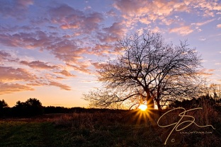 Billowy pink and purple clouds fill the sky of the silhouette of a lone apple tree. The rising sun peaking over the distant tree line, it's rays bursting forth at the base of the apple tree