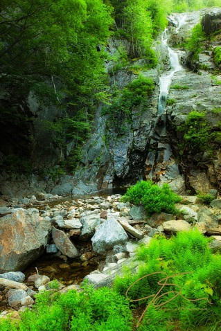 lush green foliage and ferns line the sides of Silver Cascade in Crawford Notch State park