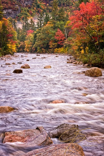 Vertical image looking upstream on the Swift River in the White Mountains of New Hampshire. Boulders strewn throughout the stream provide points of interest, while the autumn foliage lining the banks provide vibrant reds, yellows, and oranges to catch the eye. In the distance, can be seen a granite cliff.