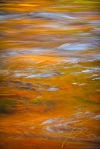 Golden Reflection, Autumn Color Reflected On The Swift River
