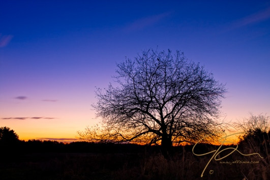 A lone apple tree is seen in silhouette at early morning twilight. The golden light of the sun is just beginning to color the horizon.