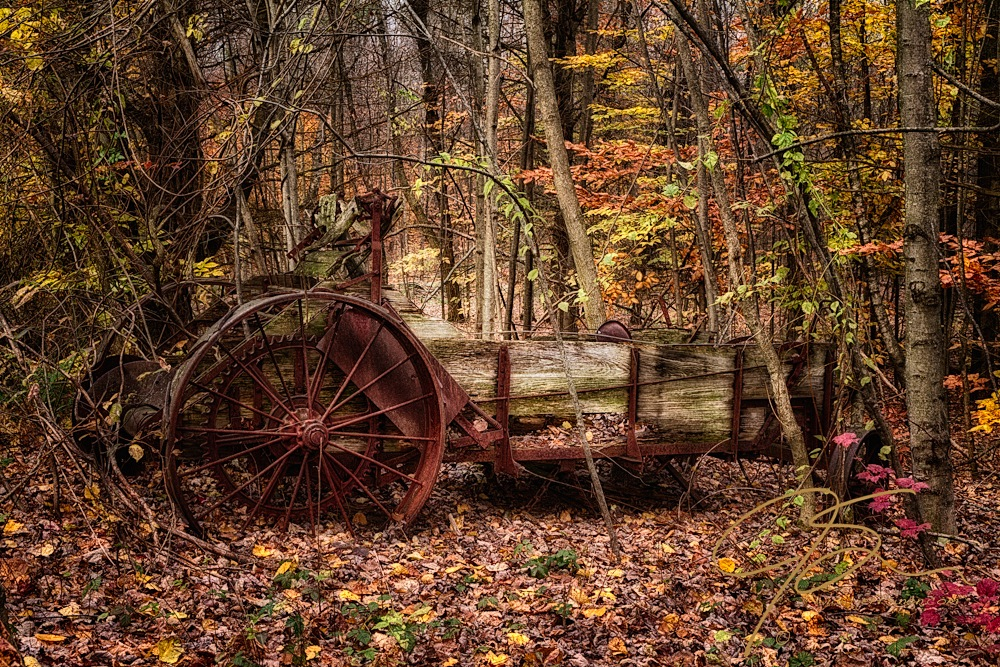 Found deep in the woods, the remains of an old horse drawn manure spreader sits among the trees growing up around, over, and through it. The large, spoked steel rear wheels, frame, spreading auger, and the front wheels, as well as what is left of the wood siding and floor, is slowly being reclaimed by the forest.