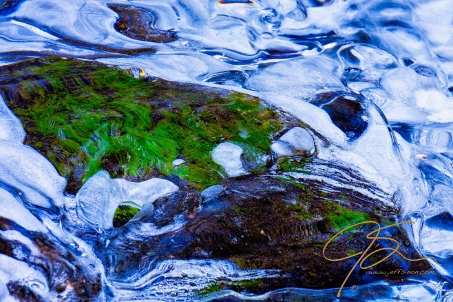 Algae Under Glass