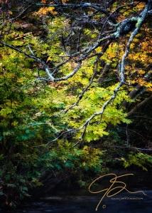 trees-over-stream-3700-Edit