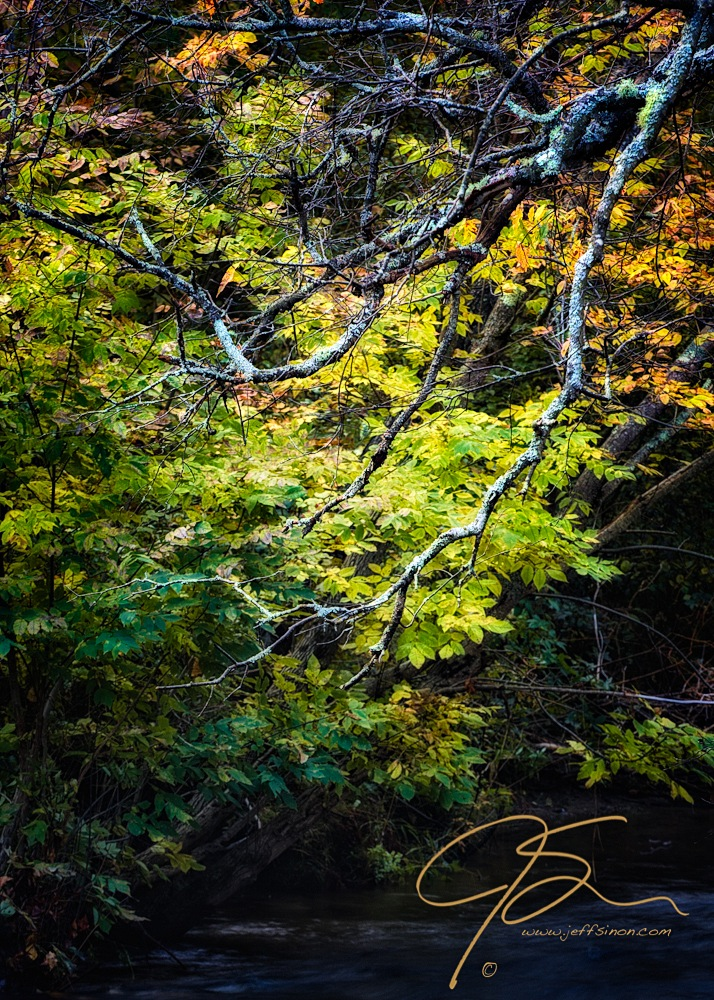 trees-over-stream-3700-Edit