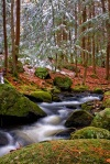 vertical image of Tucker Brook as in cascades over and around moss covered granite boulders. The evergreen trees lining the streams banks have a light frosting of the seasons first snow.