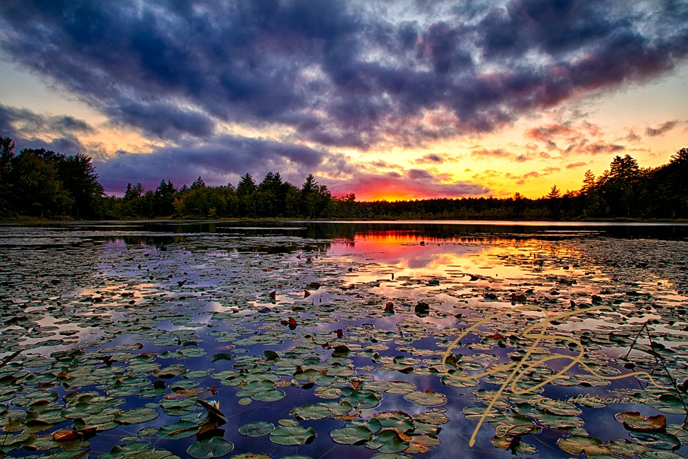 Lilypadss dominate the foreground looking out over the Bellamy Reservoir towards the setting sun. A sky filled with clouds adding drama to the scene. The suns bright glow appears like a fire on the horizon just over the tree line on the far shore. Faint pinks, purples, and golds ever so slightly coloring the clouds.