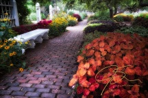 One of the brick paths, with a white bench on the left, leads deeper into the Prescott Park garden. A bright red, leafy plant dominates the right foreground, with the garden seen deeper into the frame on a misty morning in Portsmouth, NH