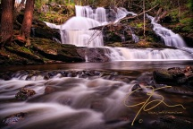 Stream flowing from the base of Garwin falls, dappled sunlight is hitting the evergreen tree trunks on the bank