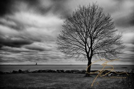Stormy skies over Whaleback lighthouse in the mouth of Portsmouth Harbor in this black and white image. A lone, leafless maple tree stands on the shore, a Christmas wreath decorated bench at it's base, stands watch over the ocean. Dark and ominous clouds fill the early morning sky in anticipation of the first winter storm.