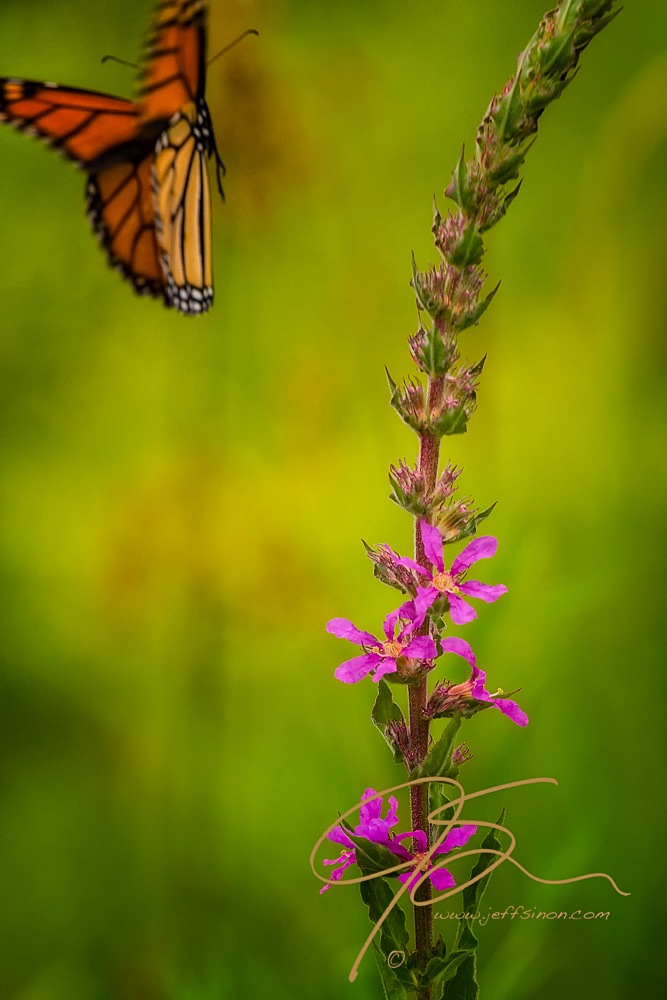 Butterfly flying away - photo#29