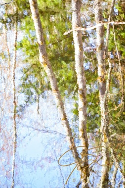 the rippled reflection of several birch trees on the surface of a river. The slow shutter speed and the rippled surface of the water give the image the look of a watercolor painting.