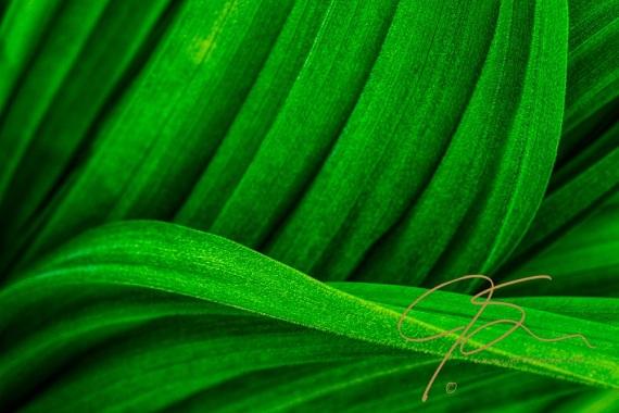 Curvy green leaves