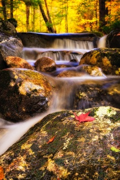 A lone red maple leaf rests on a rock in the middle of a cascading forest stream. The background bathed in golden Autumn sunshine.