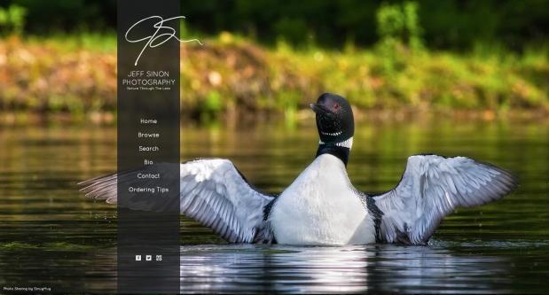 new website, jeff sinon photography, loon