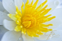 Water Lily At f/5.6