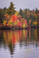 fiery autumn shore on baxter lake, nh
