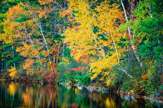 Golden Fall. Chocorua Lake, NH
