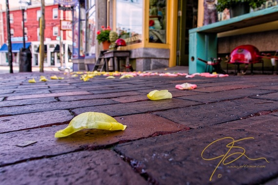 Yellow rose petals on the brick sidewalk. Downtown Portsmouth, NH