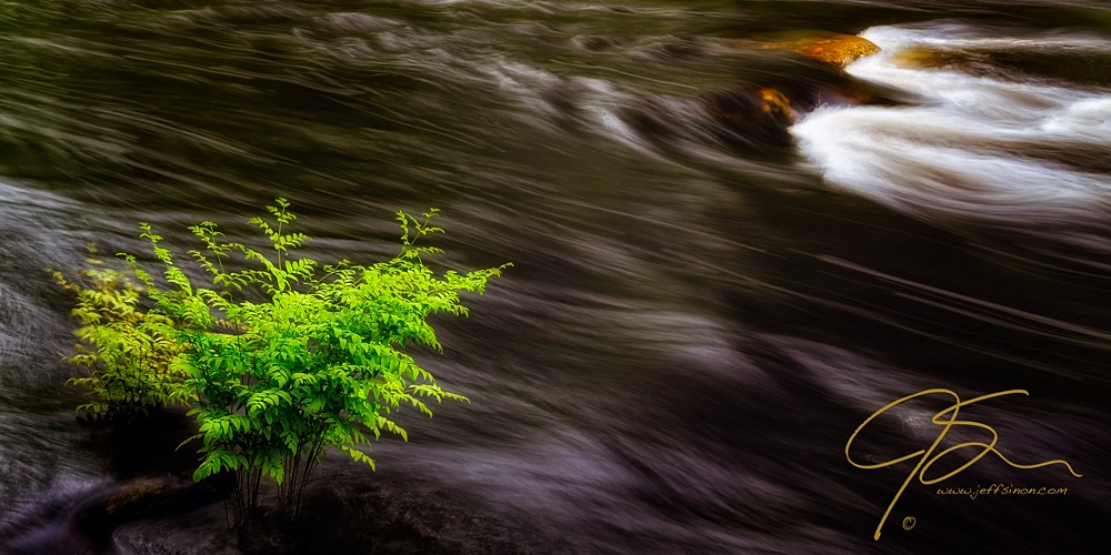 green plant in flowing water