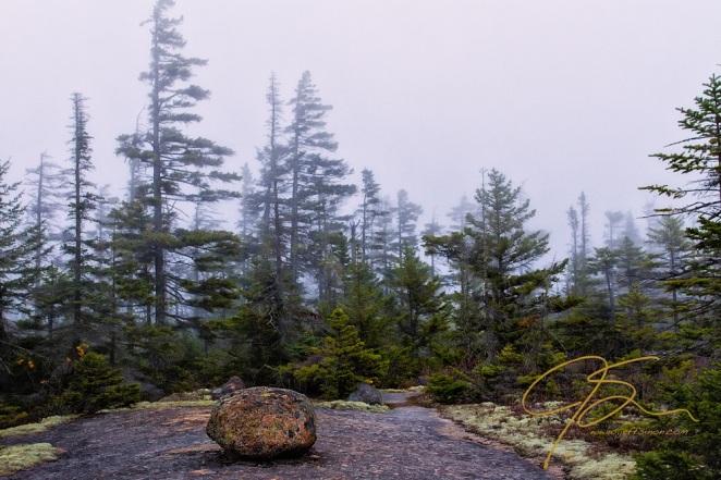 Misty Morning On Davis Path