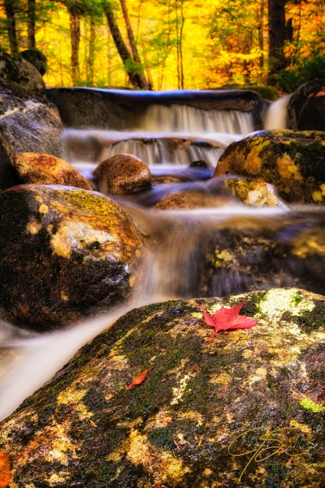Waterfall With Red Maple Leaf.