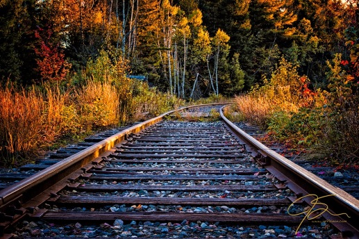 Rails. Pondicherry NWR
