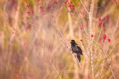 Singing The Song Of Spring