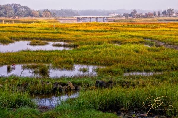 Odiorne Salt Marsh