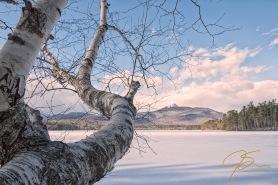 birch_tree_at_chorocua_lake_winter_0992-Edit