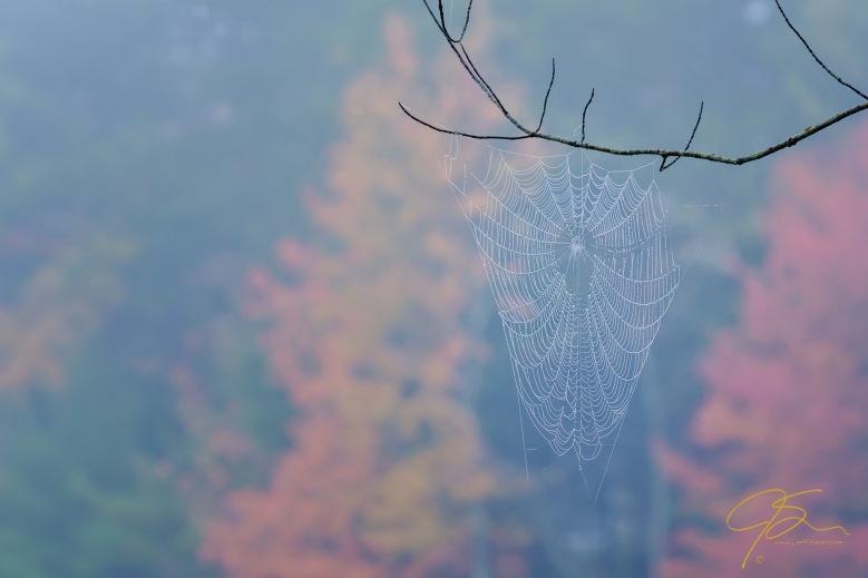 Autumn Web.