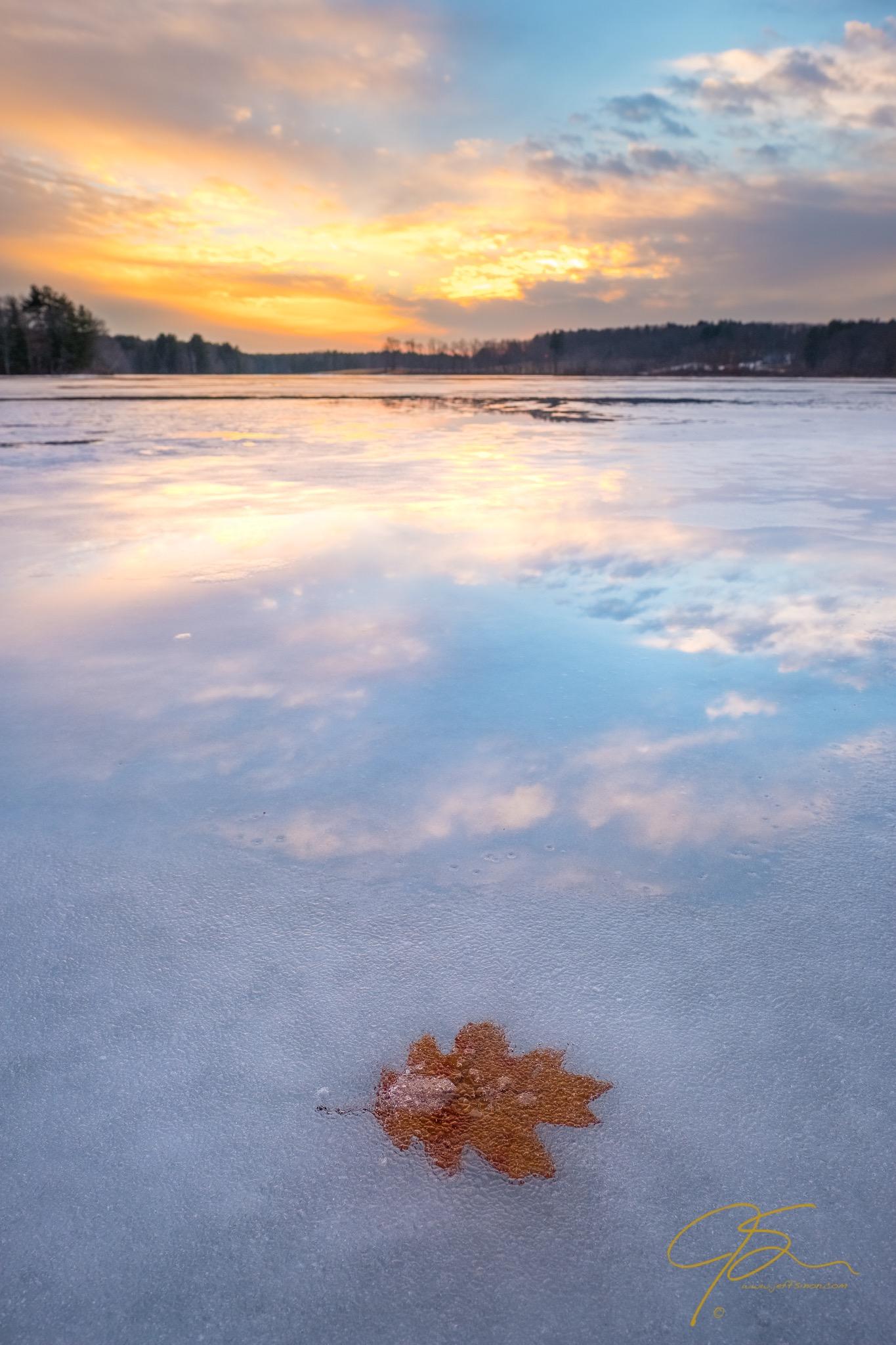 Oak Leaf In The Ice At Sunset