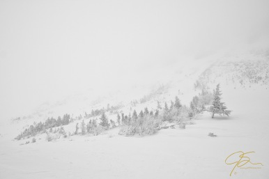near whiteout conditions in Tuckerman Ravine