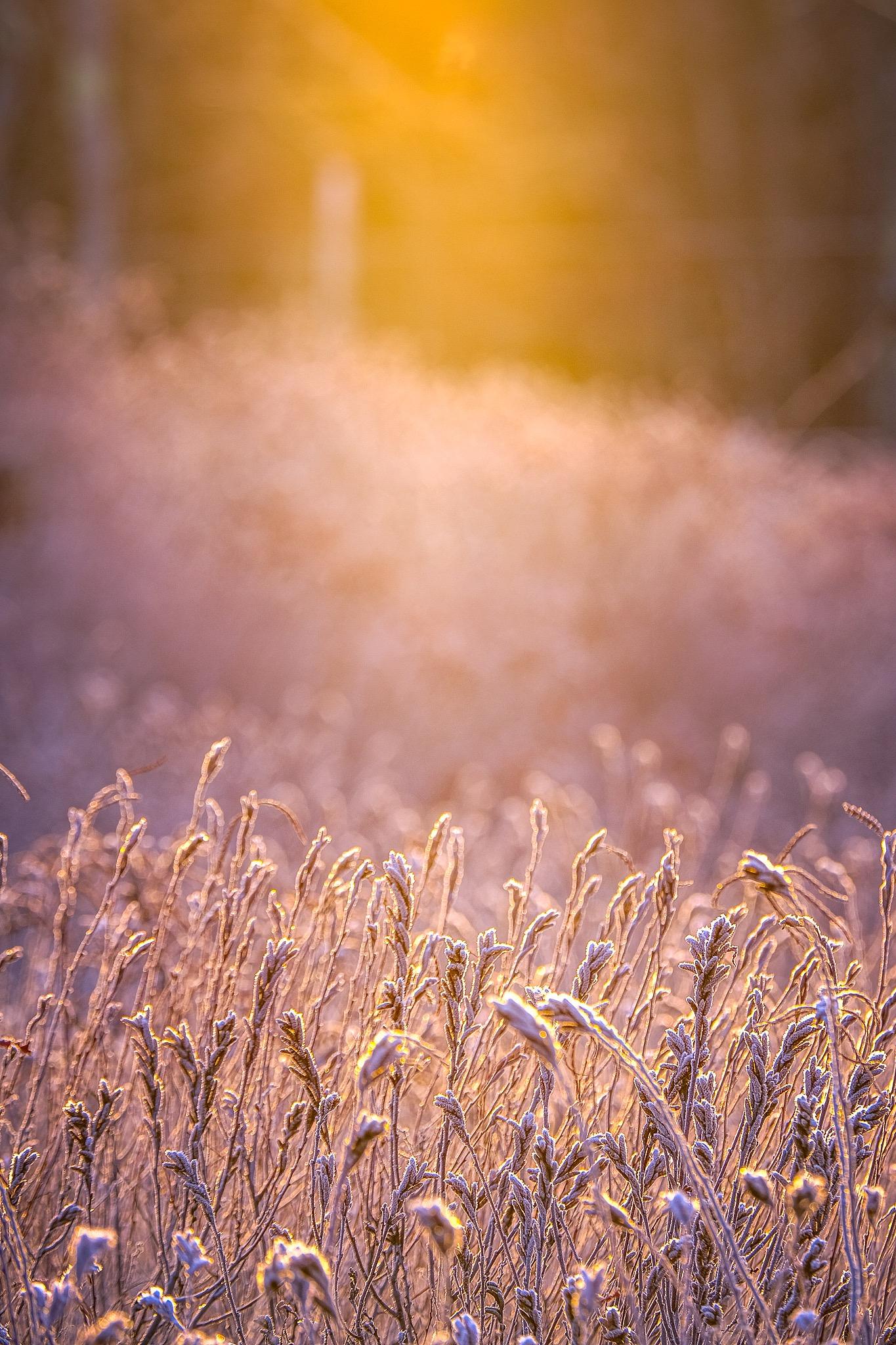 sweet fern in golden sunlight
